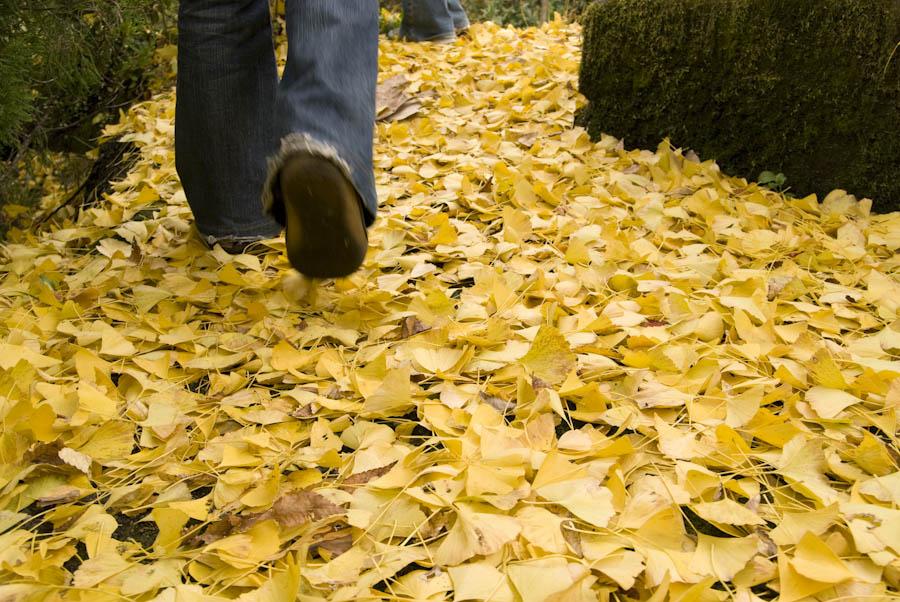 žltý koberec