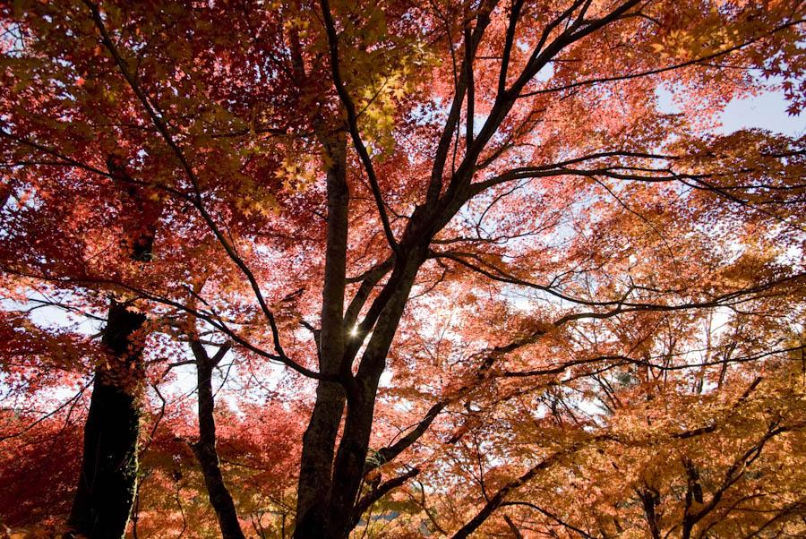 červená záplava listov