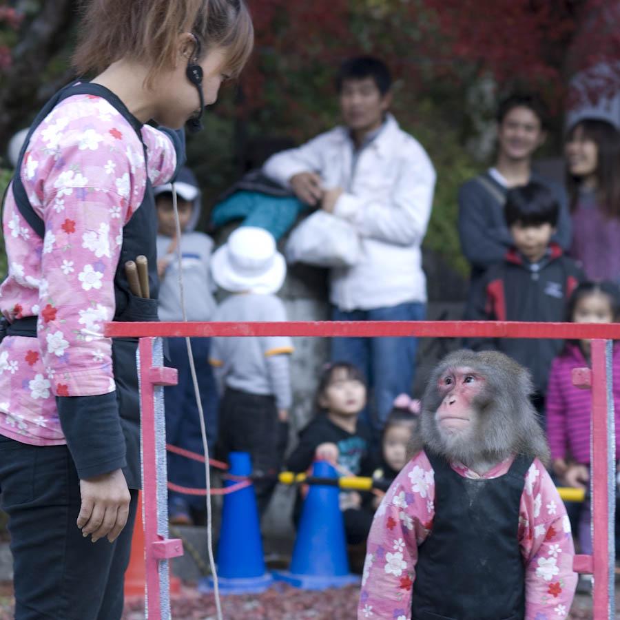 opica - pohľady