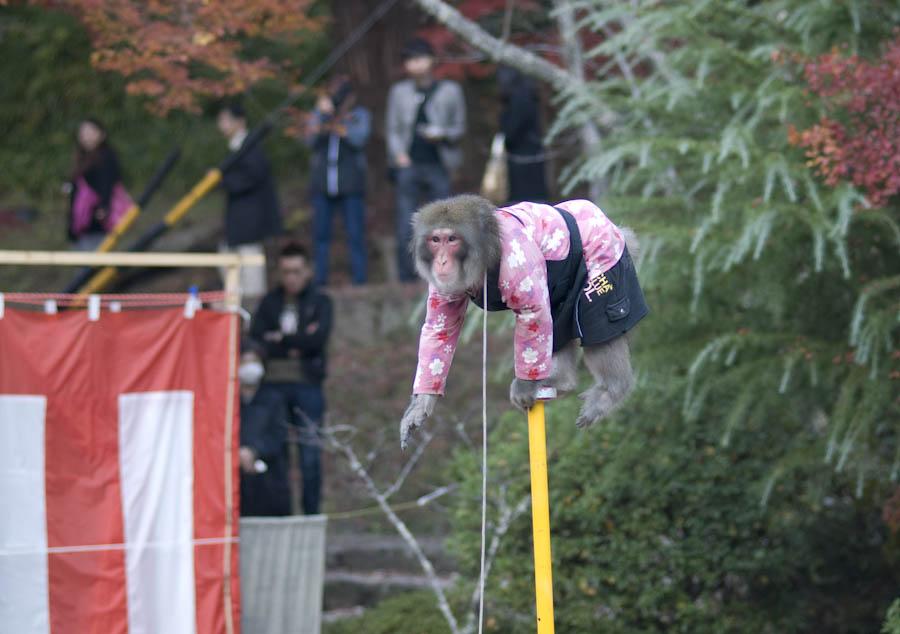 opica na tyči