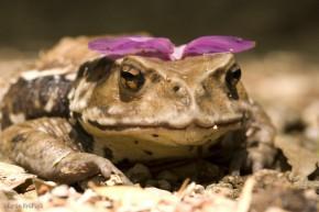 žaba portrét