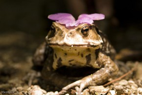 žaba s kvetom