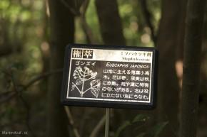 Popis stromu 2