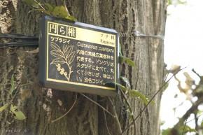 Popis stromu