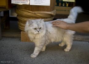 mačka v Tsumagojuku